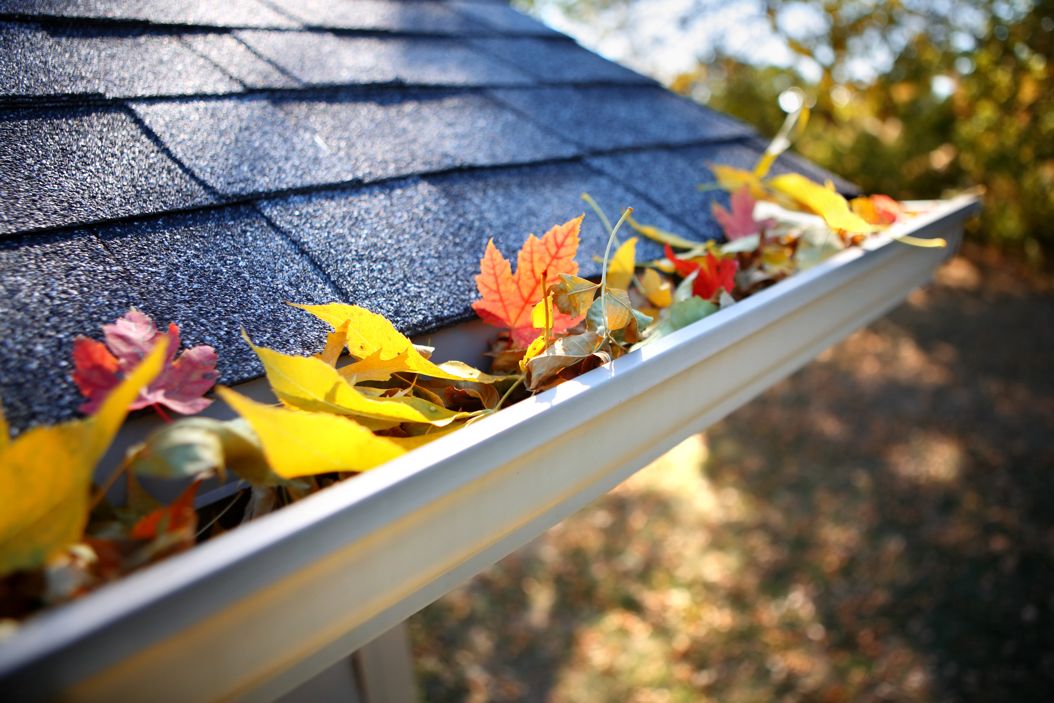 Roof, Gutters, Fall Leaves - Armor Roofing
